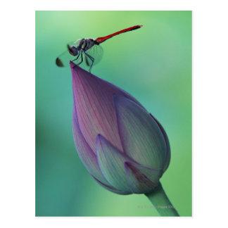Brote de flor de Lotus y una libélula Tarjetas Postales