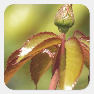 Brote de flor y hojas de Spikey Pegatina Cuadrada