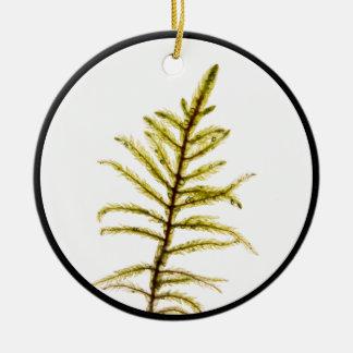 Brote del musgo adorno navideño redondo de cerámica