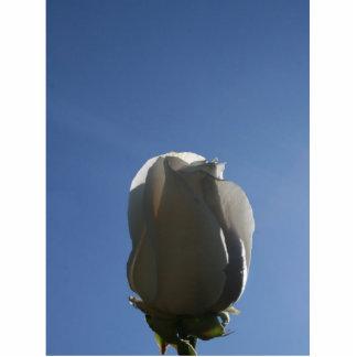 Brote del rosa blanco hecho excursionismo contra e escultura fotografica