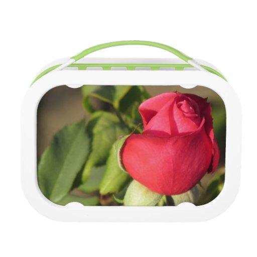 Brote del rosa rojo
