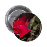 Brote del rosa rojo pin