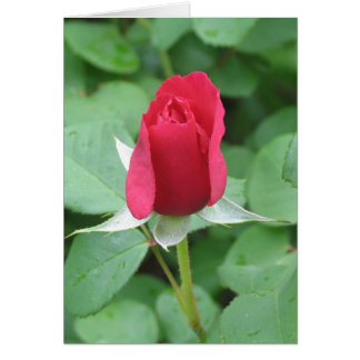Brote del rosa rojo tarjetas