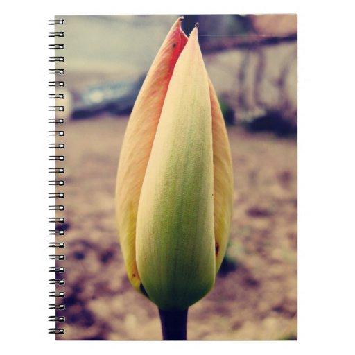 Brote del tulipán libros de apuntes