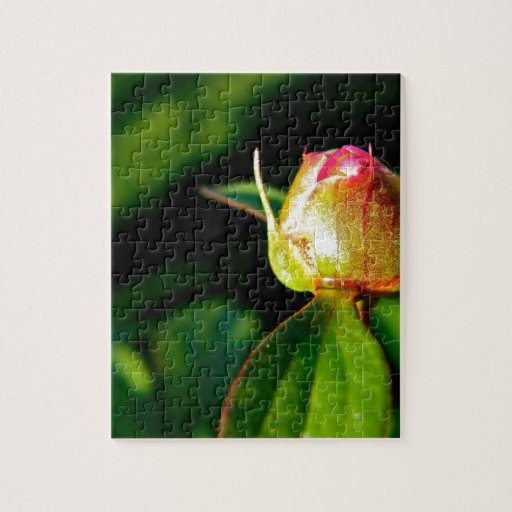 Brote floreciente rompecabeza con fotos