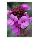 brote púrpura tarjeta