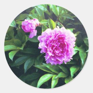 Brote y floración subiós clavel rosado pegatina redonda