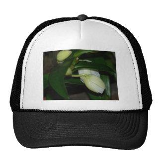 Brotes blancos de la orquídea gorro