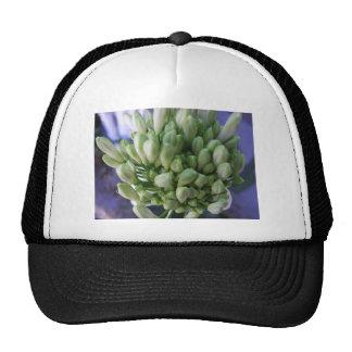 Brotes blancos del allium gorras de camionero