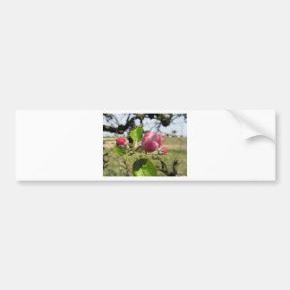 Brotes cerrados borrosos de la flor de la manzana pegatina para auto
