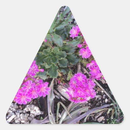 Brotes Colcomanias Trianguladas Personalizadas