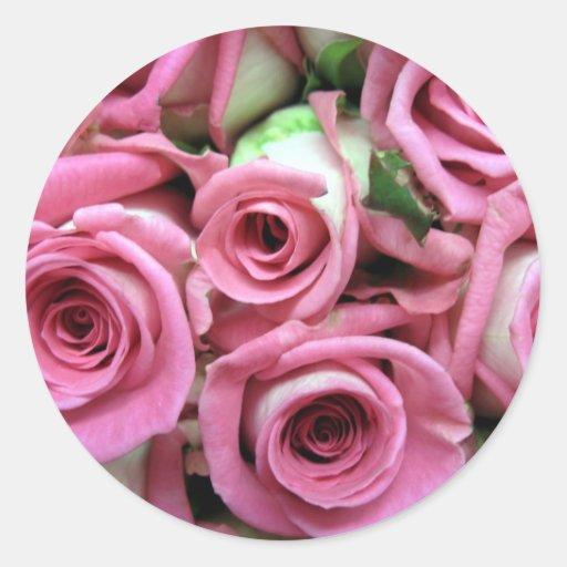 Brotes color de rosa rosados pegatina redonda