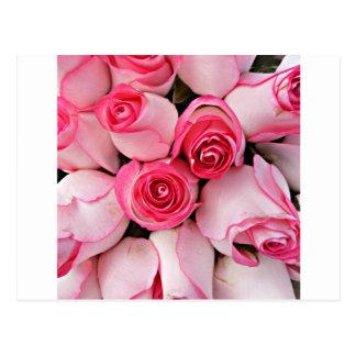 Brotes color de rosa rosados tarjeta postal