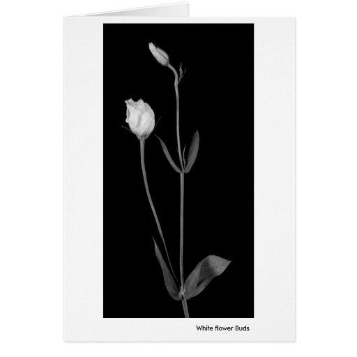 Brotes de flor blanca felicitacion