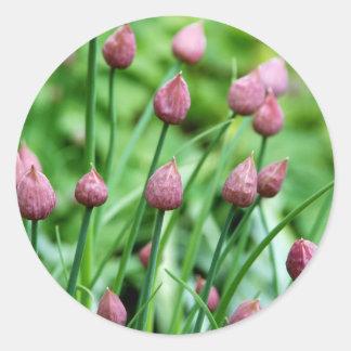 Brotes de flor de la cebolleta pegatina redonda