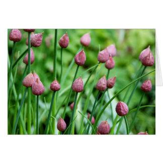 Brotes de flor de la cebolleta tarjeta de felicitación