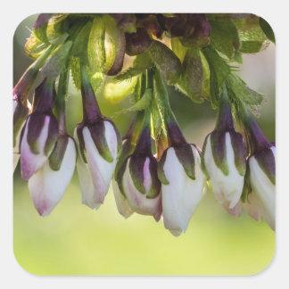 Brotes de flor del flor pegatina cuadrada