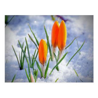 Brotes de flor frescos anaranjados brillantes de l postales