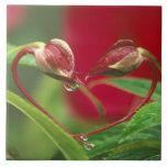 Brotes de la begonia en forma del corazón con desc azulejo cerámica