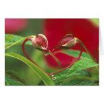 Brotes de la begonia en forma del corazón con desc felicitacion