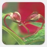 Brotes de la begonia en forma del corazón con pegatina cuadradas