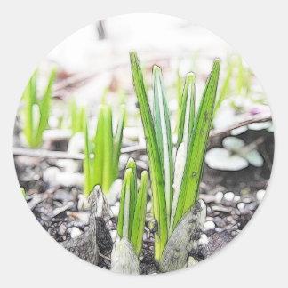 Brotes del azafrán en el jardín de la primavera pegatina redonda