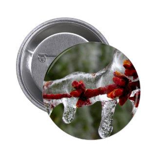 brotes del hielo del arce pins