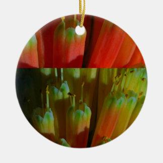 BROTES florecientes: Cactus salvaje:  Saludos, Ornamentos Para Reyes Magos