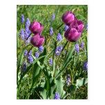 Brotes púrpuras que fluyen tarjeta postal
