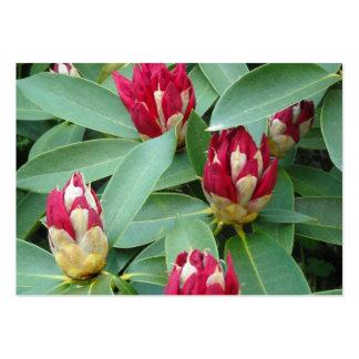 Brotes rojos del rododendro tarjeta de negocio