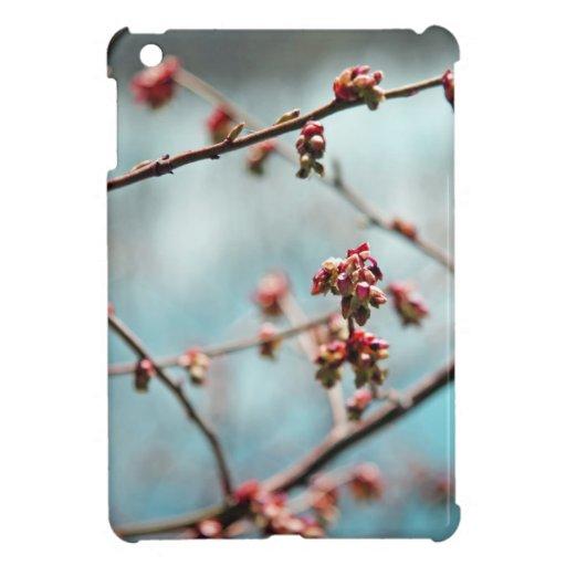 Brotes rosados de la primavera en azul