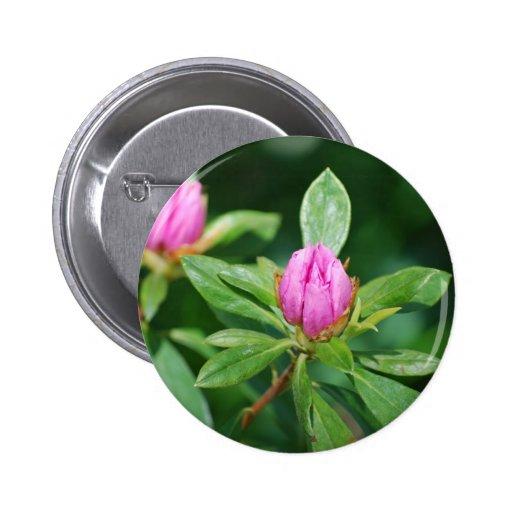 brotes rosados pins