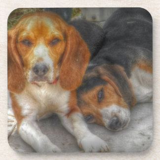 Brother Beagles Drink Coaster