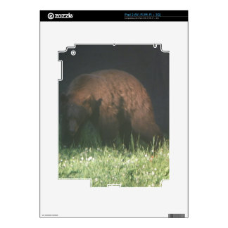 Brother Bear Skins For The iPad 2