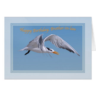 Brother-in-law's Birthday with Royal Tern Bird Card