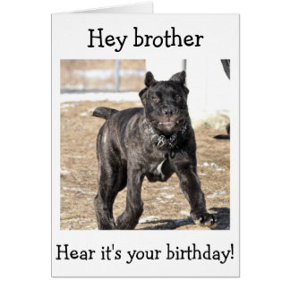 """BROTHER-ITALIAN CANE CORSO-""""HAPPY BIRTHDAY TO YOU GREETING CARD"""