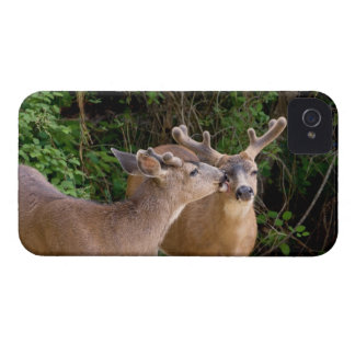Brotherly Love Deer Bucks iPhone 4 Case-Mate Case