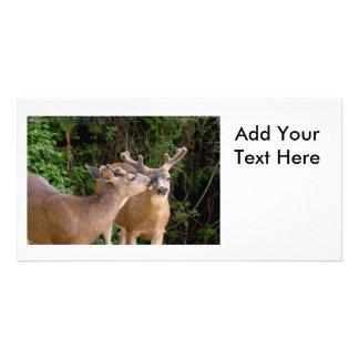 Brotherly Love Deer Bucks Photo Card