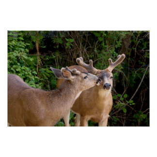 Brotherly Love Deer Bucks Poster