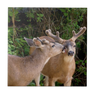Brotherly Love Deer Bucks Tiles