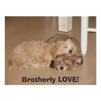 Brotherly LOVE! Poster