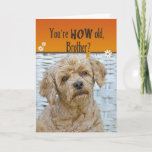 "Brother's Birthday Card<br><div class=""desc"">Cute expression on poodle's face for humorous Brother's birthday.</div>"