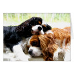 Brothers Cavaliers Cards