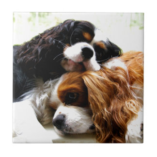 Brothers Cavaliers Ceramic Tile