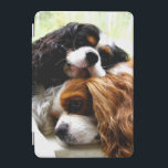 "Brothers Cavaliers iPad mini Cover<br><div class=""desc"">Two Cavalier King Charles spaniels taking a nap</div>"