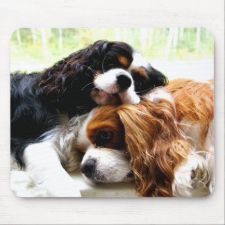 Brothers Cavaliers Mouse Pad
