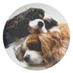 Brothers Cavaliers Party Plates