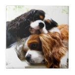 Brothers Cavaliers Small Square Tile