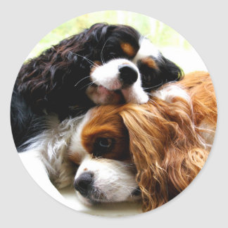 Brothers Cavaliers Classic Round Sticker
