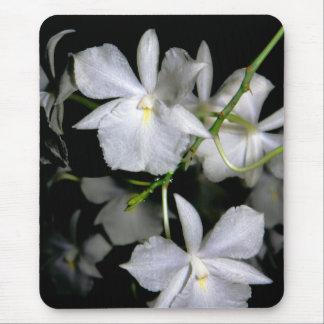 Broughtonia sanguinea f. alba mouse pad
